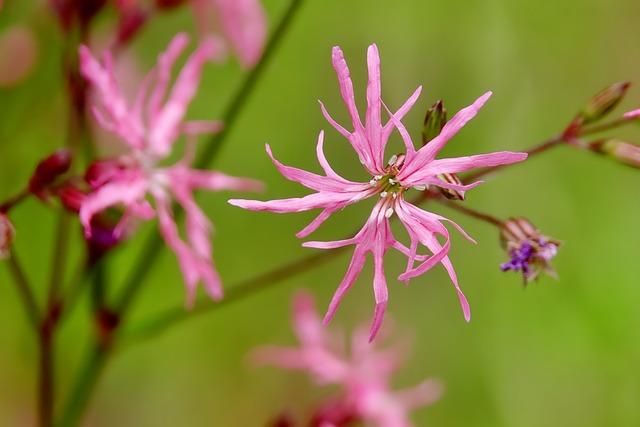 Nature, Flower, Plant, Summer, Close