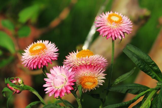 Nature, Plant, Flower, Summer, Leaf, Outdoor