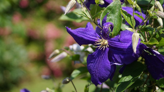 Flower, Priroda, Meadow Flowers, Summer