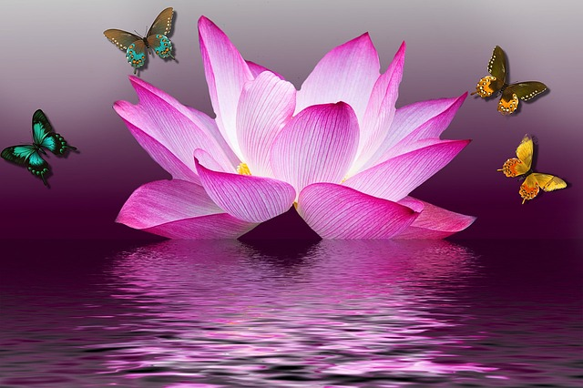 Butterfly, Lotus, Flower, Summer, Lake, Nature, Pink