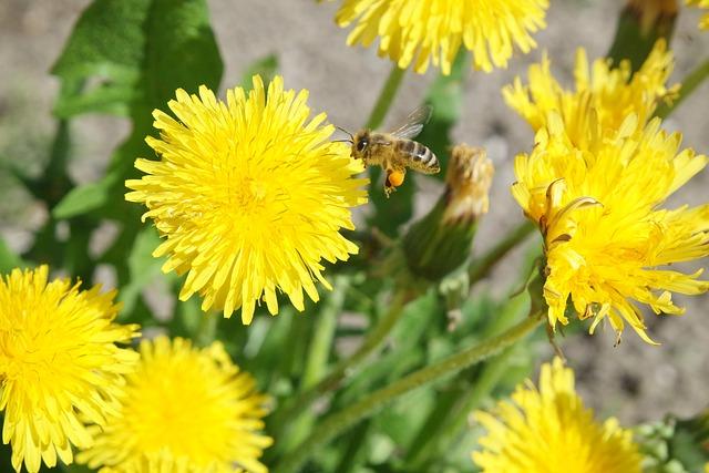 Nature, Flower, Plant, Summer, Dandelion, Bee, Spring