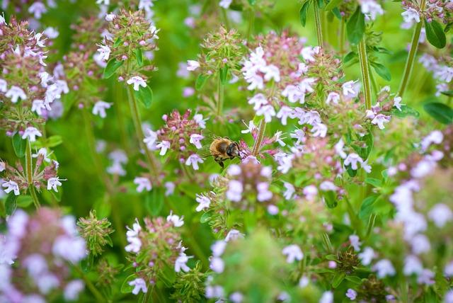 Flower, Plant, Nature, Sheet, Field, Bumblebee, Summer