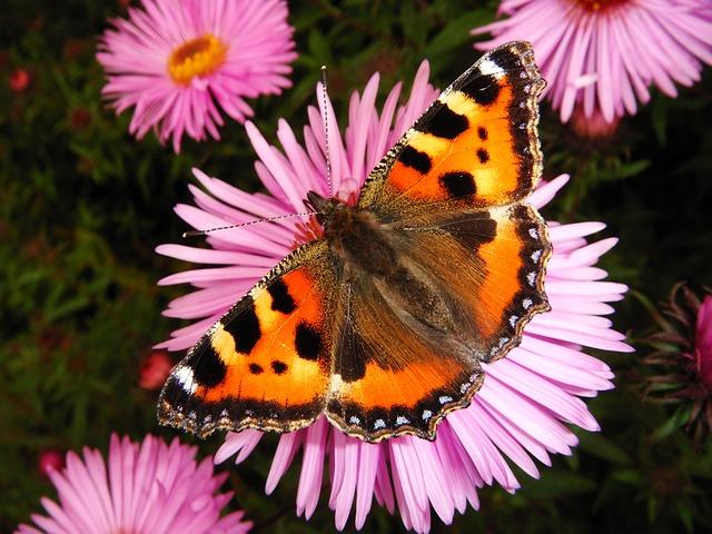 Nature, Flower, Summer, Garden, Plant, Butterfly Day