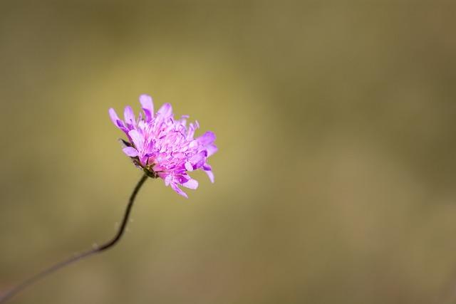 Flower, Pointed Flower, Pink, Violet, Close, Summer