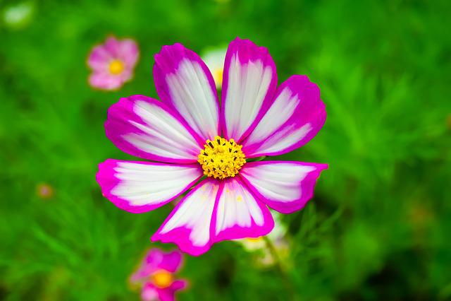 Gesanghua, Summer, Flowers