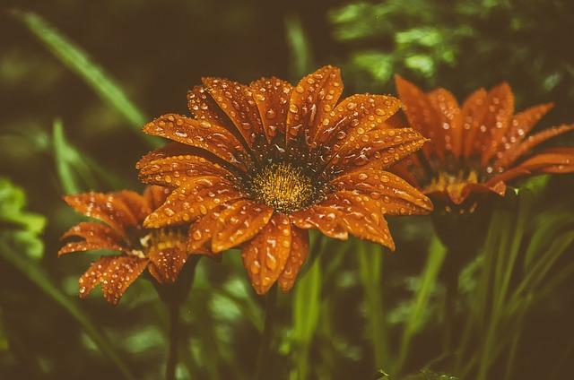 Flower, Nature, Flowers, Plant, Garden, Summer Flowers