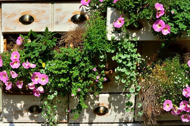 Petunia, Balcony Plants, Summer Flowers