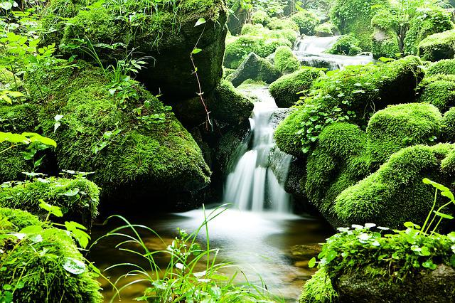 Forest, Water, Valley, Nature, Landscape, Summer, Green