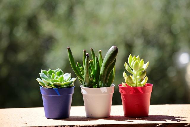 Fat Plants, Garden, Terrace, Summer, Cactus, Colors