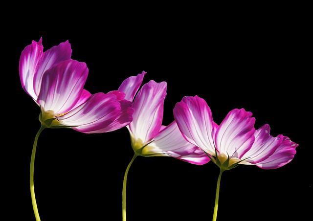 Flowers, Summer, Garden Plant