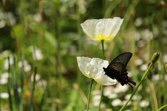 Nature, Outdoors, Grass, Summer, Flowers, Butterfly