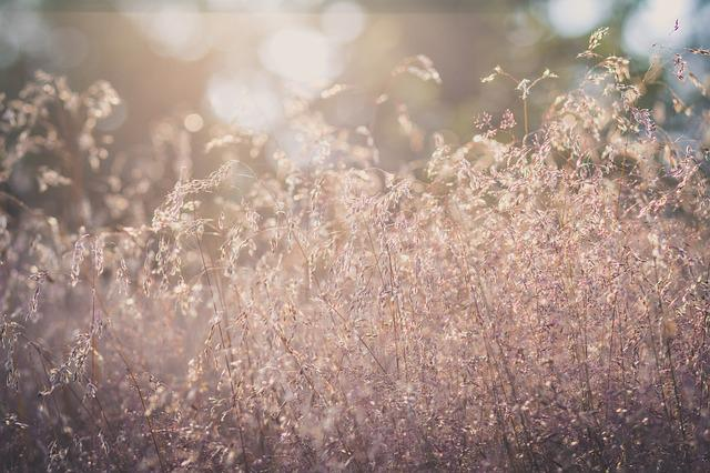 Grass, Sun, Grasses, Back Light, Mood, Summer, Nature