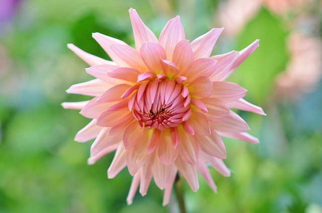 Flower, Natur, Floral, Summer, Green, Plant, Natural