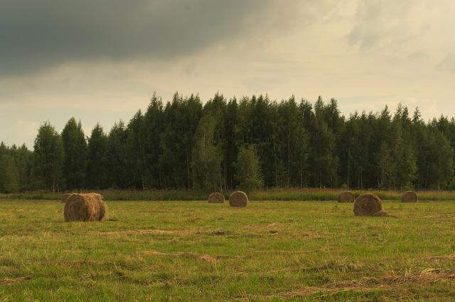 Field, Meadow, Rick, Hay, Summer, Forest, The Harvest