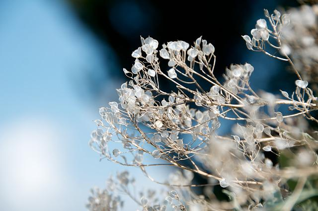 Flower, Nature, Botanical, Flora, Plant, Herbal, Summer