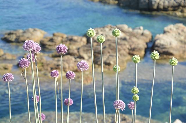 Color, Sea, Summer, Nature, Holiday, Sardinia, Calm