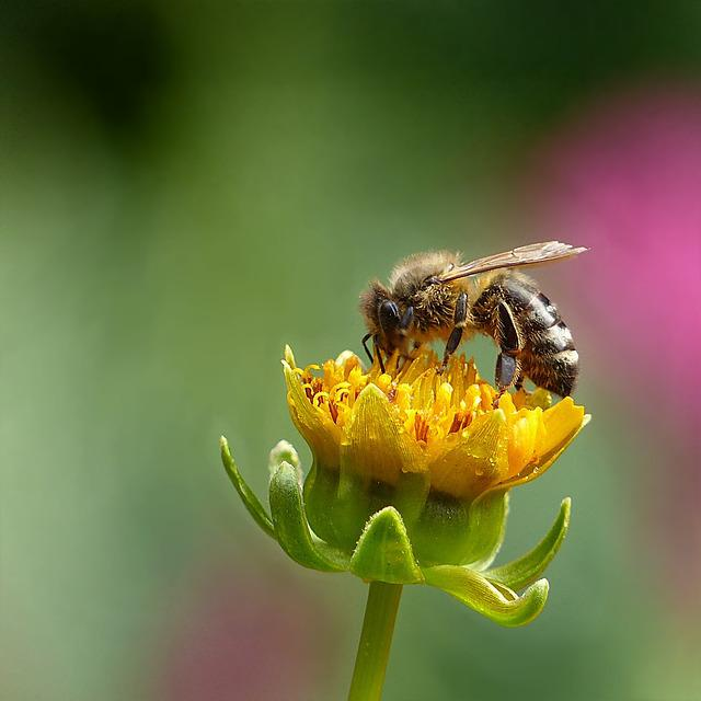 Animal, Insect, Honey Bee, Bee, Summer, Foraging