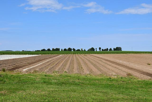 Asparagus Field, Agriculture, Summer, Horizon, Vision