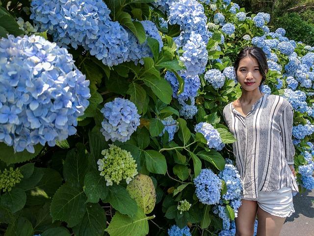 Hydrangea, Jeju, Women's, Summer