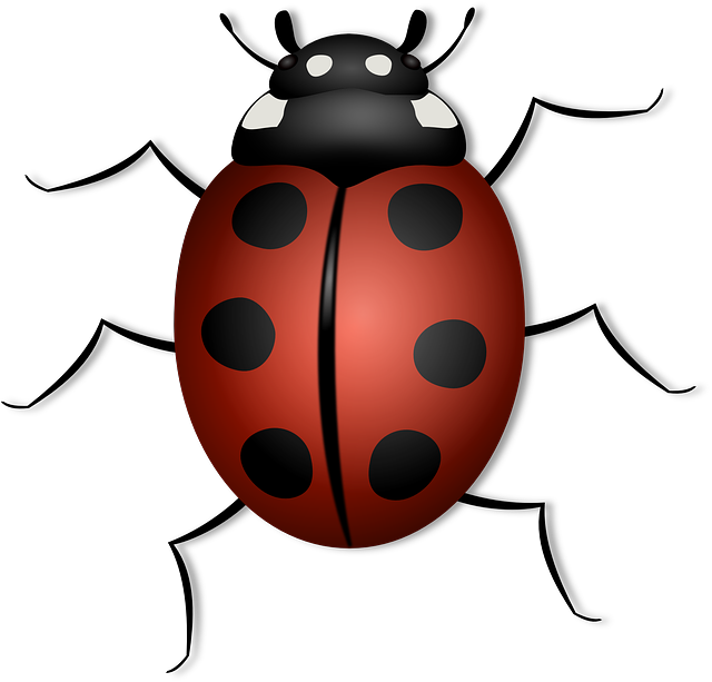 Ladybug, Animal, Beetle, Bug, Insect, Luck, Summer, Red