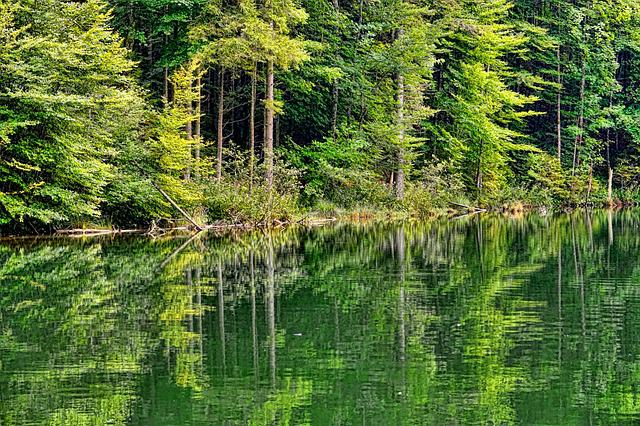 Nature, Wood, Summer, Waters, Pond, Forest, Landscape
