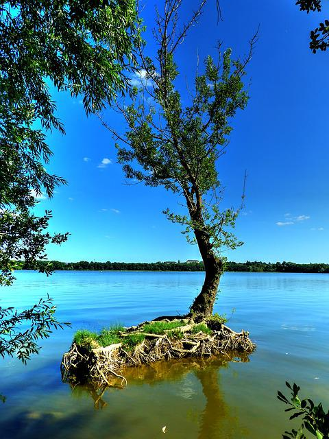 Lake, Trees, Landscape, Water, France, Summer