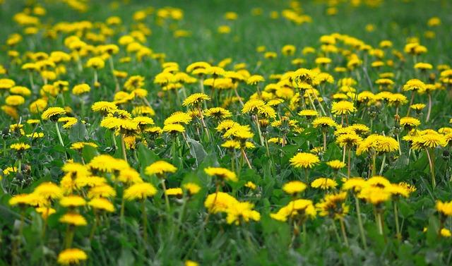 Flower, Summer, Nature, Hayfield, Lawn, Floral