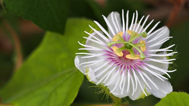 Nature, Flora, Flower, Summer, Leaf, Beautiful