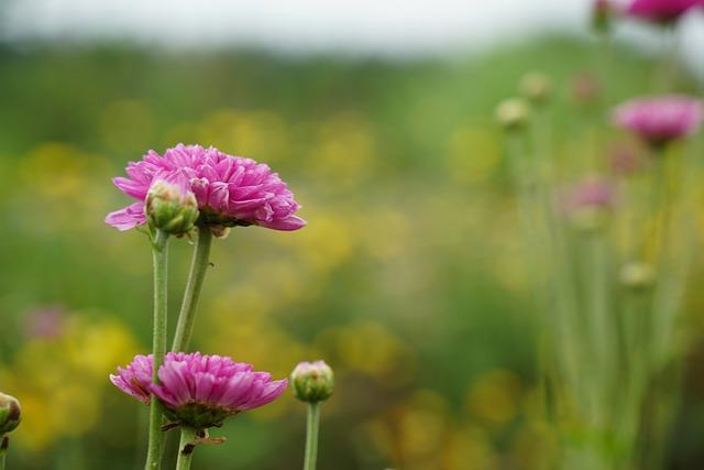 Nature, Flower, Flora, Summer, Field, Leaf, Outdoors