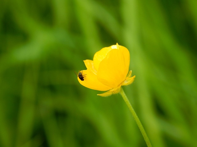 Nature, Plant, Flower, Summer, Leaf, Growth, Grass