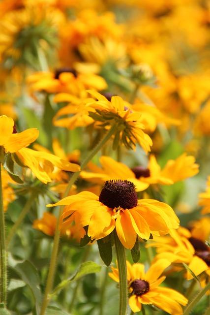 Flowers, Summer Meadow, Nature, Plant, Landscape
