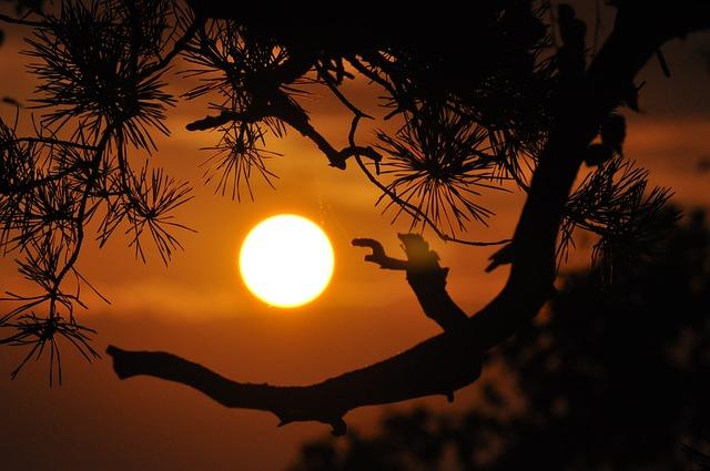 Sunset, Mountains, Orange, Branches, Summer, Evening