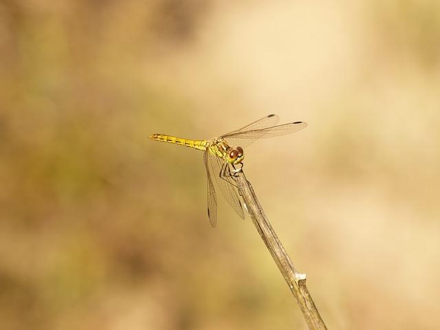 Dragonfly, Bug, Summer, Nature, Macro, Animals
