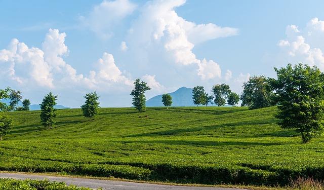 Nature, Landscape, Field, Grass, Summer