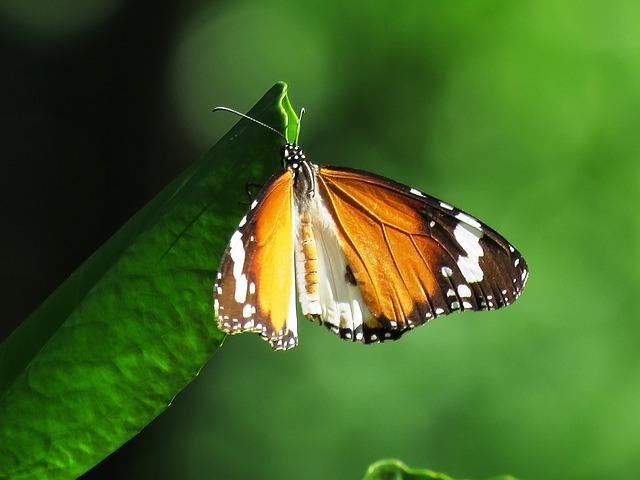 Butterfly, Beautiful, Love, Nature, Summer, Spring