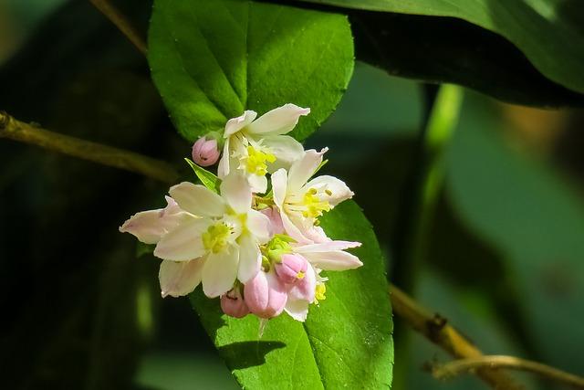 Nature, Plant, Flower, Leaf, Summer, Garden, Outdoor