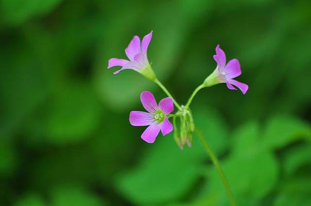 Nature, Flora, Flower, Outdoors, Summer