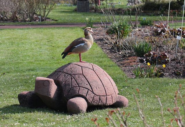 Grass, Nature, Park, Summer, Animal, Goose, Turtle