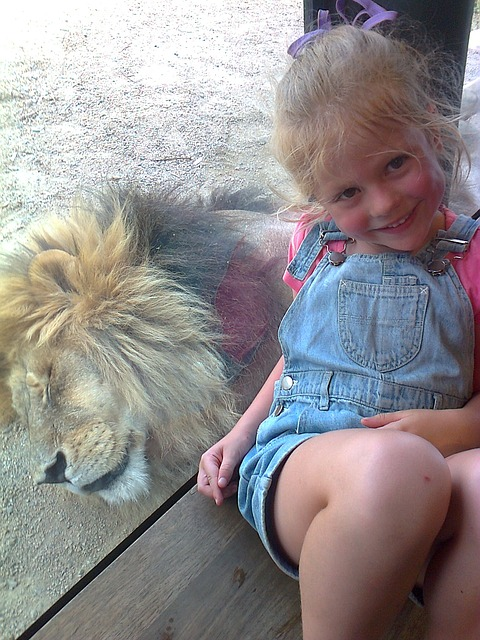 Lion, Girl, Zoo, Child, Childhood, Summer, Pet, Animal