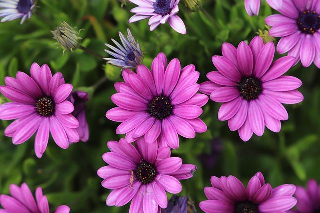 Flower, Plant, Nature, Garden, Summer, Petal, Flowering