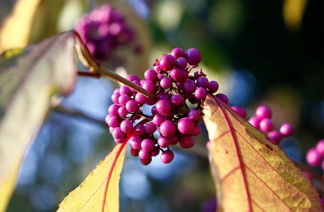 Nature, Plant, Flower, Tree, Leaf, Summer, Garden