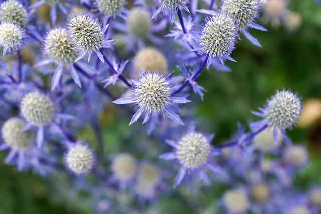 Silver, Thistle, Nature, Plant, Kitchen, Herb, Summer