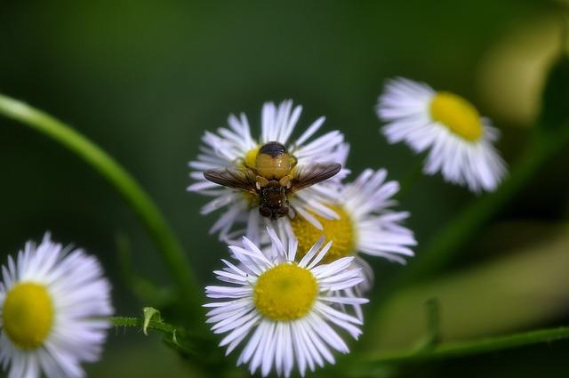 Nature, Plants, Flowers, Summer, Leaf
