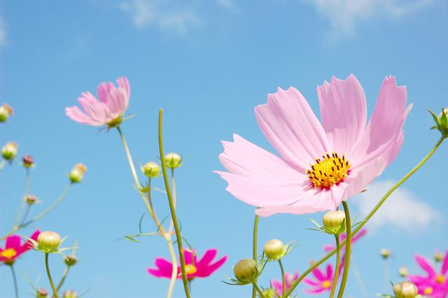 Flowers, Nature, Plants, Summer, Leaf