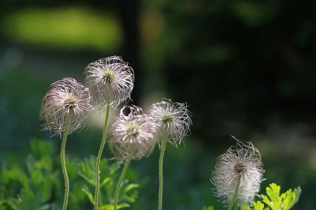 Nature, Flowers, Plants, Summer, Dandelion Bunch, Pool