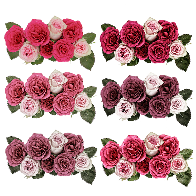 Roses, Flowers, Rose Flower, Pink, Garden, Summer