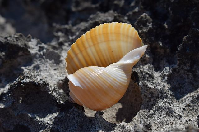 Shell, Beach, Summer, Nature, Seashell