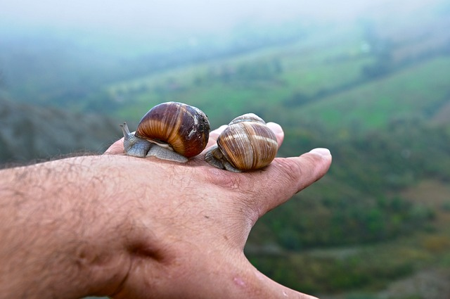 Nature, Snail, Outdoors, Clam, Summer, Invertebrate