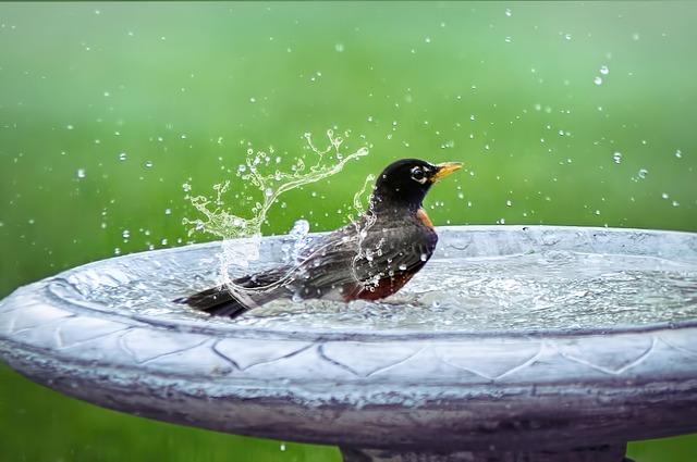 Bird Bath, Splashing, Bird In Bath, Bird, Summer