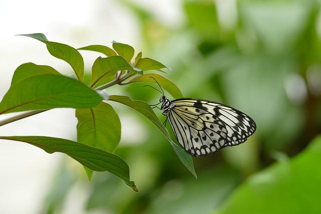 Butterfly, Spring, Summer